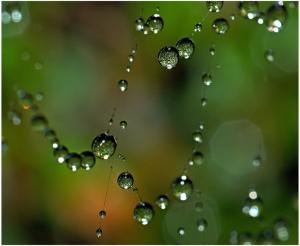 web of love image