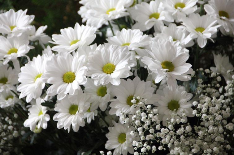 flowers-200602_1280