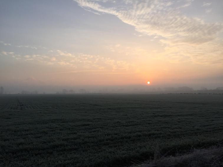 Fog on the Meadow