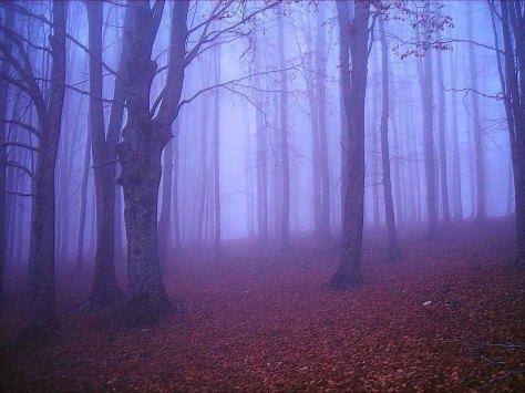 Nature149