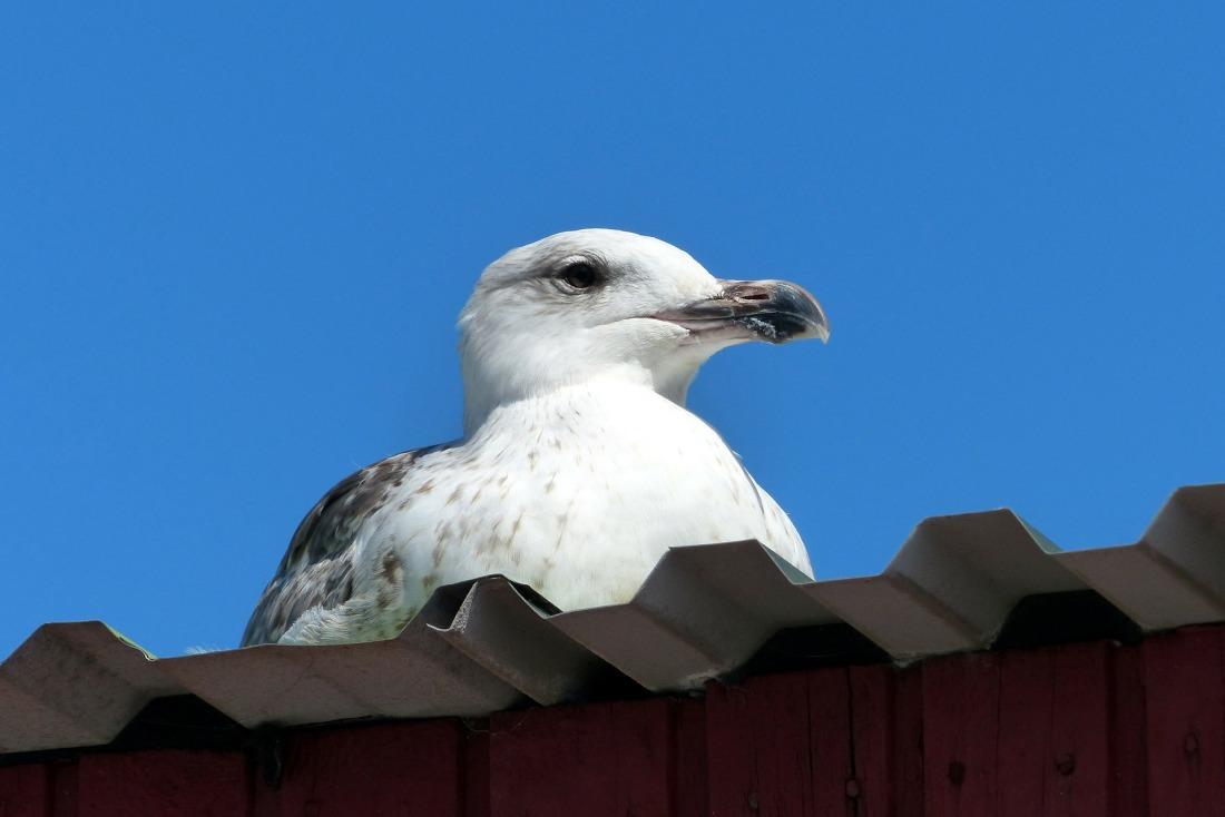 bird-253681_1920